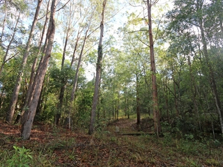 Lot 68 Ashby-Tullymorgan Road Ashby , NSW, 2463